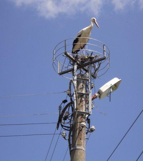 Най-големият проблем на шефа на НЕК бил как да поиска поскъпване на тока