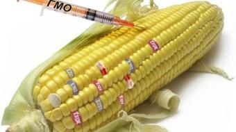 Русия въвежда пълна забрана на всички ГМО продукти и съставки