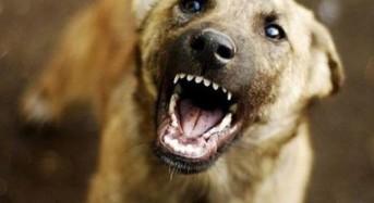 Как да се защитите от глутница кучета