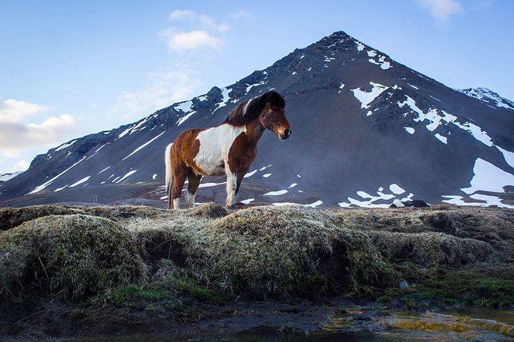 iceland-nature-travel-photography-104-5864e072f41c8__880