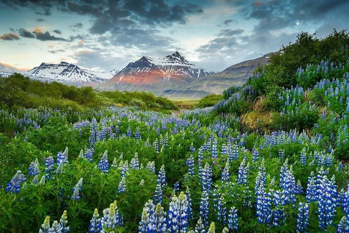iceland-nature-travel-photography-80-5863c4464032a__880