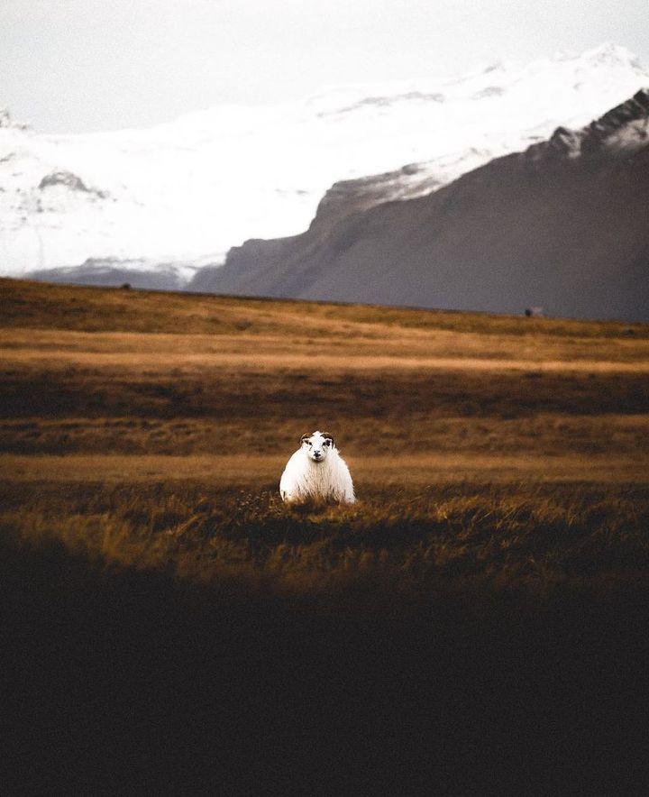 iceland-nature-travel-photography-99-5863c358bfda6__880