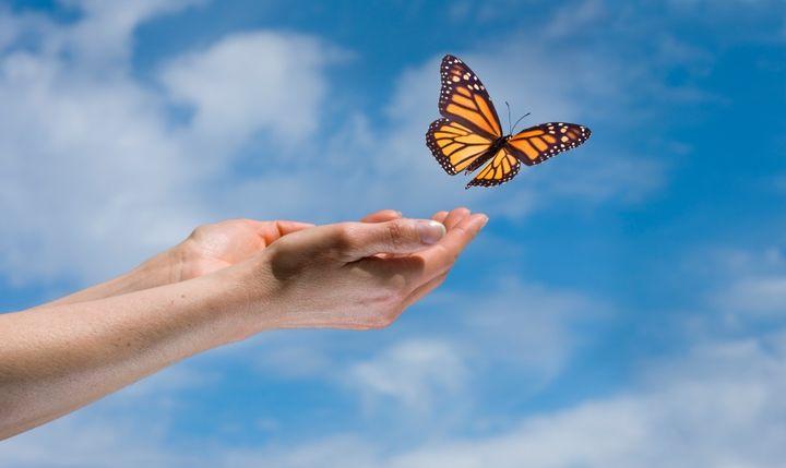 butterflyhands-2015-Oct26