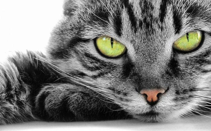 green-eye-cat-1920x12001