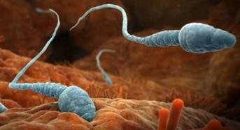 Депопулацията: Драстично намаляващият брой на  сперматозоидите  обрича човечеството на изчезване