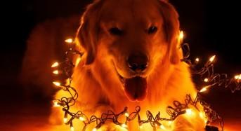 Какви опасности дебнат през 2018 – Годината на Жълтото Куче