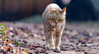 Магията на котките. Защо вашата котка е дошла именно при вас и защото точно в този ден ?