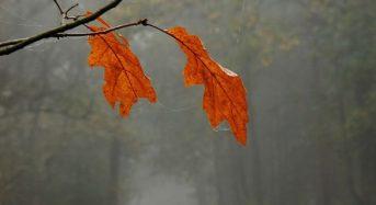 Ноември ще е отличен за всички, но 4 зодиакални знака ги очаква невероятен късмет!
