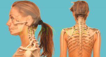 Челюстите и гръбнака са свързани. Боли ви гърба – лекувайте зъбите си!