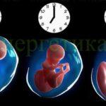 Съдбата на всеки човек се определя Веднага, в момента на раждането му!