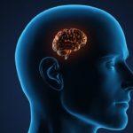 Прекалено многото килограми разрушават мозъка