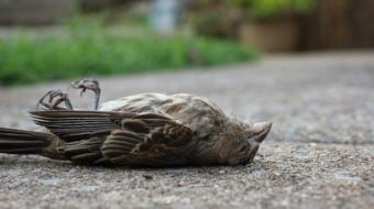 Птиците умират от новата 5G мрежа, тя вреди и на хората! (видео)