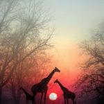 Спрете за малко за да може вашата душа  да ви настигне: красива африканска притча
