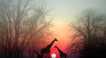 Спрете за малко за да може вашата душата да ви настигне: красива африканска притча