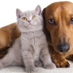 Die Welt: Наистина ли   котките и кучетата ни обичат или са с нас само заради храната?