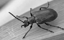 Да хванеш бръмбар…