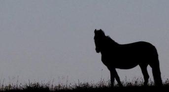 Накъде гледа конят? Тест за това, което се случва в подсъзнанието ви!