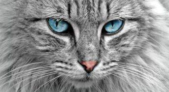 Доказано: Котките имат изключителни екстрасензорни способности!