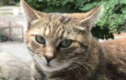 Мисията на котката е да изчисти негативната енергия от живота ви