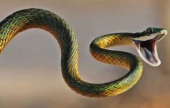 Сляпата змия и старият дървосекач – притча