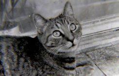 Тайната сила на котките: как усещат човешките болести и как ни предупреждават за това