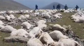 Мълния уби наведнъж над 500 овце в Грузия (видео)